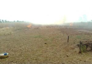 gambut kebakaran lahan