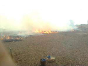 kebakaran padi gambut