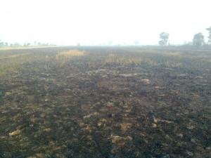 kebakaran lahan padi gambut