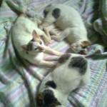 Ular Masuk Kamar | Kucing vs Ular