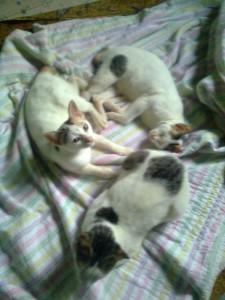 kucing belang tiga vs ular