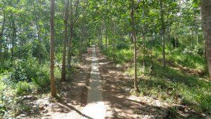 Bukit Matang Kaladan Riam Kanan Kalimantan Selatan 1