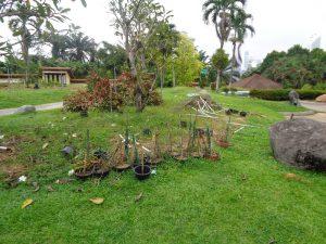 Taman Tasik Perdana Malaysia Anggrek